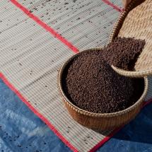 drying-pepper__starling-farm_kampot-pepper-farm-1