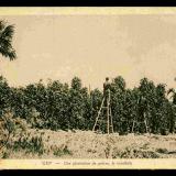 history_starling-farm_kampot-pepper_kampot-01