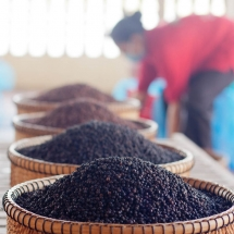 sorting-pepper_starling-farm_kampot_organic-1
